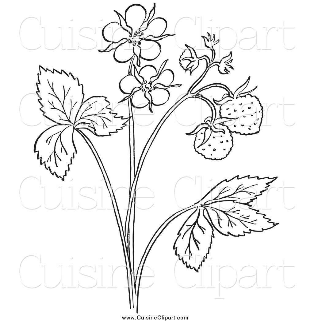 Cuisine Clipart of a Black and White Strawberry Plant with ... for Clipart Strawberry Black And White  588gtk