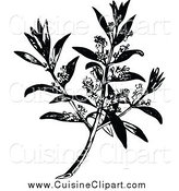 Cuisine Clipart of a Black and White Flowering Olive Branch by Prawny Vintage