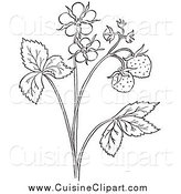 Cuisine Clipart of a Black and White Strawberry Plant with Blossoms by Picsburg