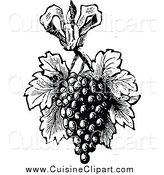 Cuisine Clipart of a Grapes with Leaves - Retro Black and White Design by Prawny Vintage
