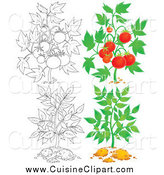 Cuisine Clipart of Tomato and Leafy Plants by Alex Bannykh