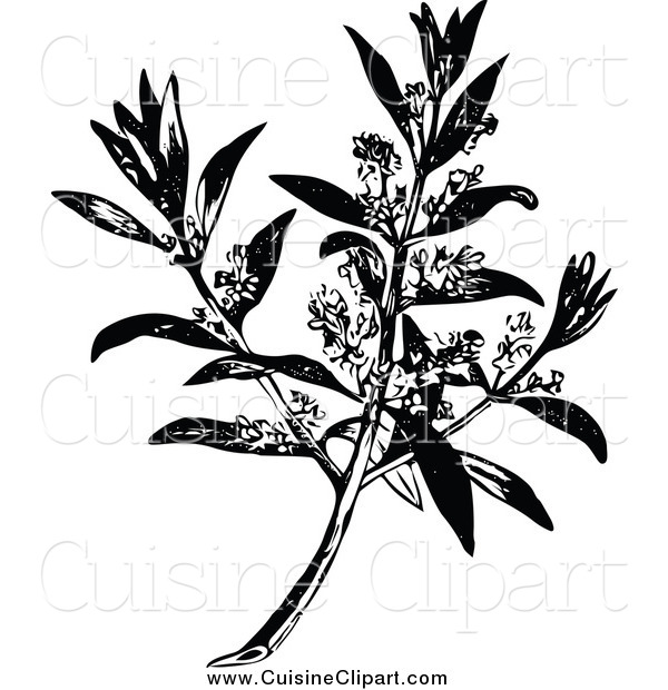Cuisine Clipart of a Black and White Flowering Olive Branch