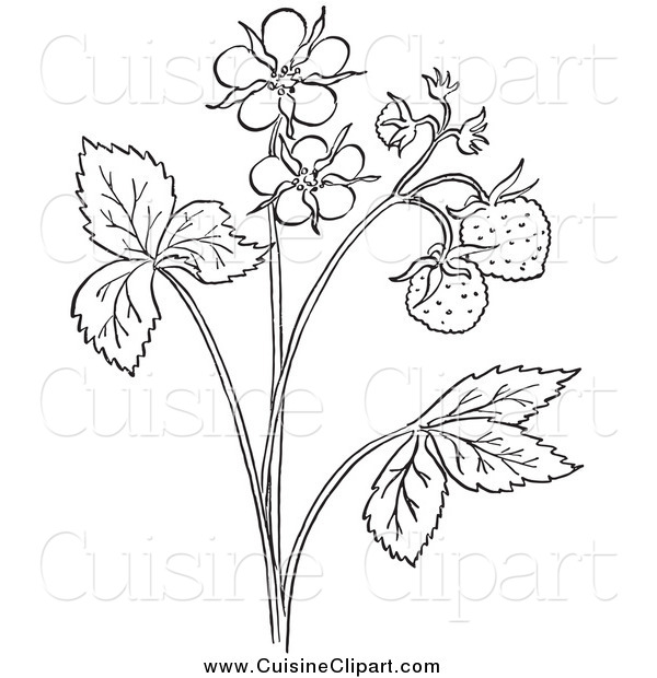 Cuisine Clipart of a Black and White Strawberry Plant with Blossoms